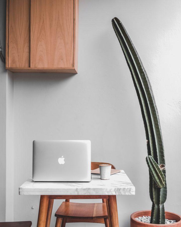 Wabi Sabi Design Cactus
