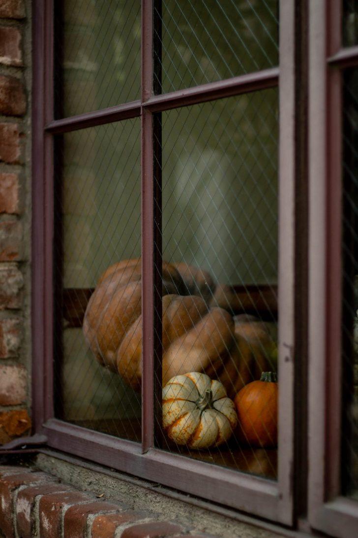 pumpkin seed oil pumpkins in a window