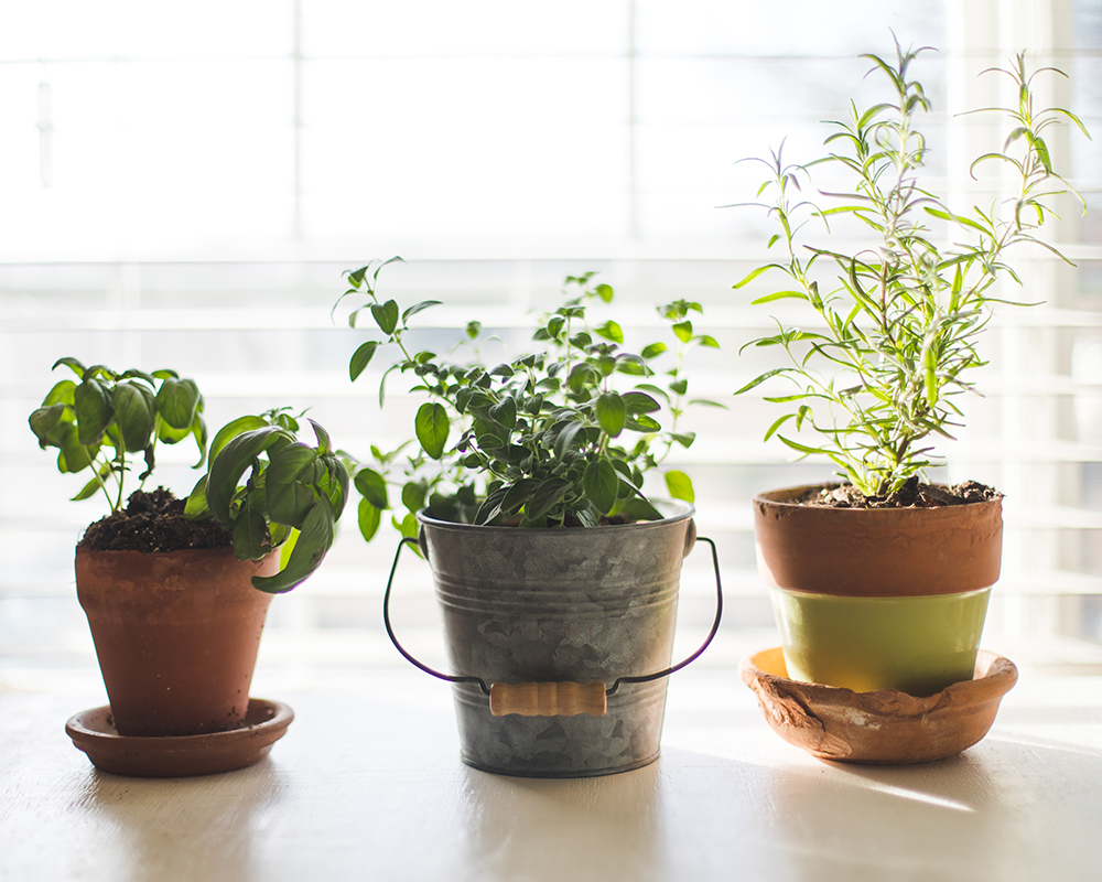 indoor vegetable garden herbs