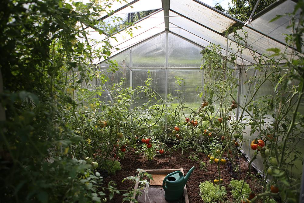 victory garden greenhouse