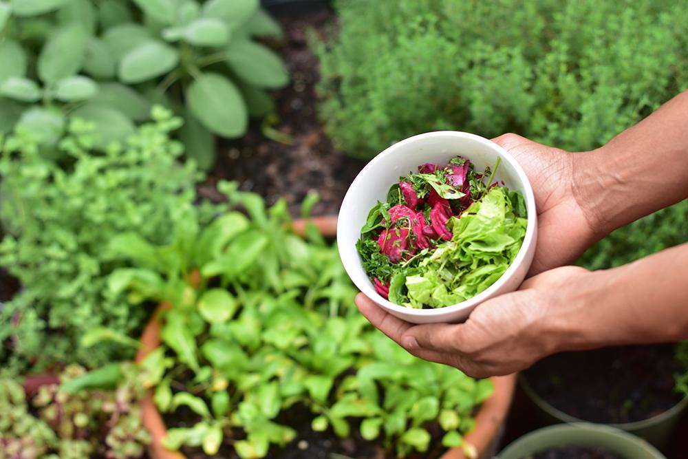 victory garden harvest