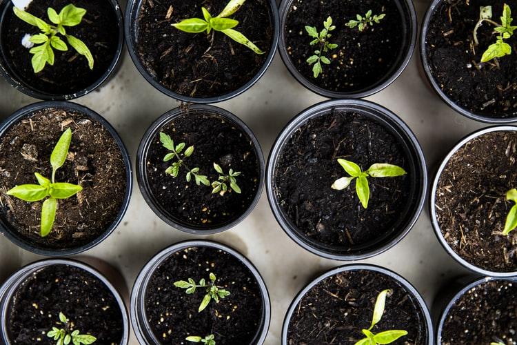 best fertilizer for vegetable gardens 1