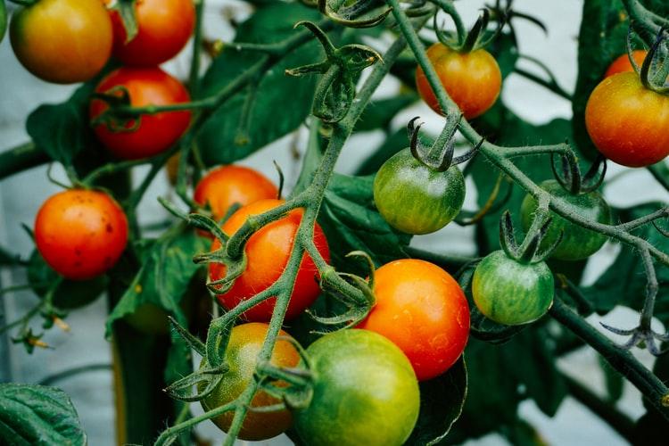 best fertilizer for vegetable gardens 3