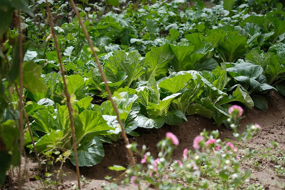 vegetable garden design 3